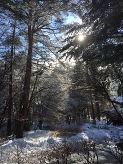 ムーンライト 冬の森
