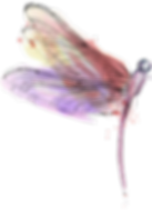 dragonfly9.png