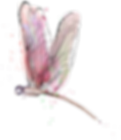 dragonfly8.png