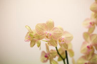 la-finestra-sui-fiori-fiore-chi-siamo.jp