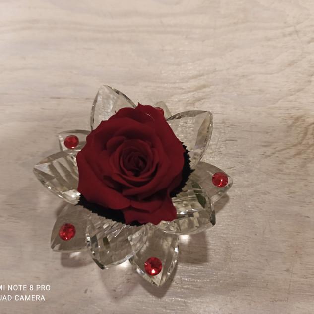 Rosa Stabilizzata Rossa