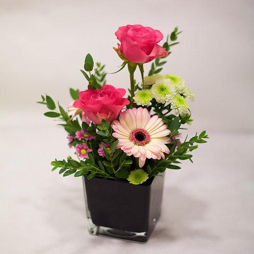 Rose e Gerberine