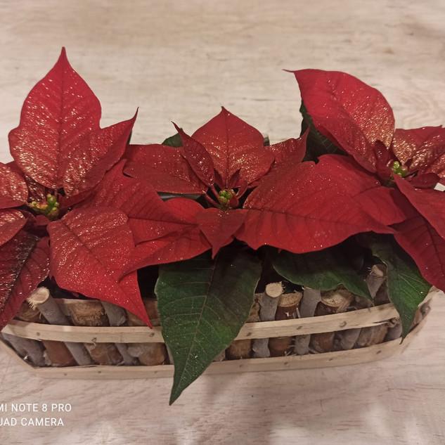 Tris Stelle di Natale piccole con glitter oro - cesto in legno