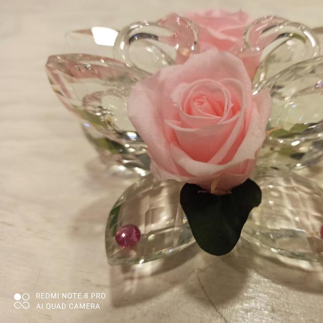 Rosa Stabilizzata Rosa