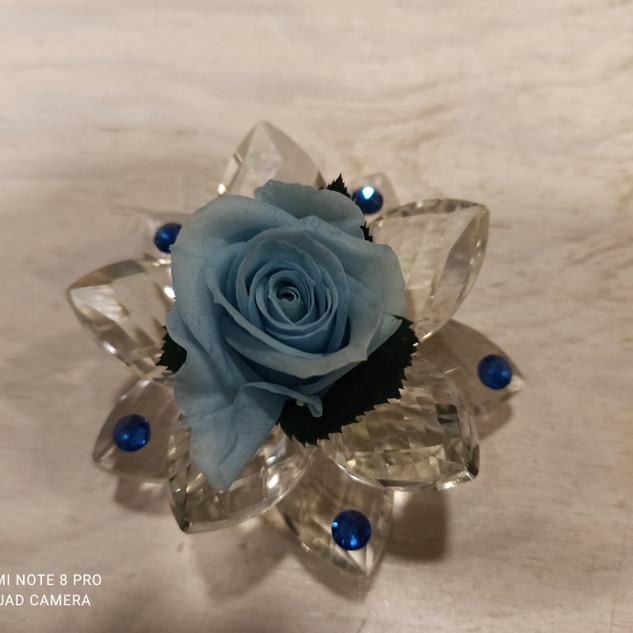 Rosa Stabilizzata Azzurra
