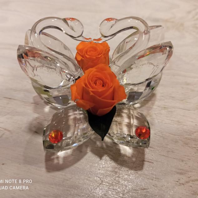 Rosa Stabilizzata Arancione