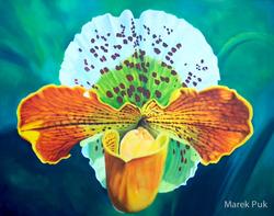 Große Frauenschuhorchidee