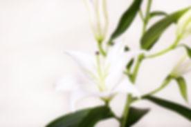 Brisbane Flowers