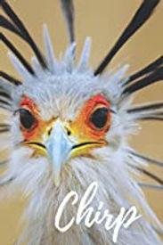 Chirp from amazon.jpg