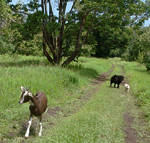 green trail of bliss cropped 2.png