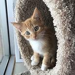 Adopt a Cat or Kitten