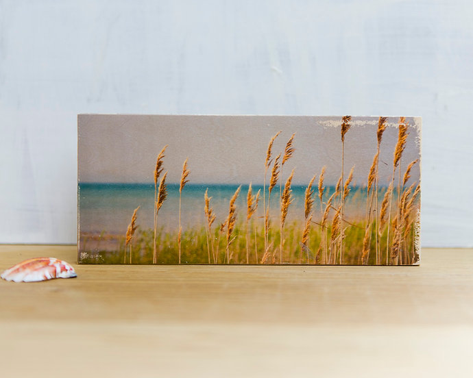 Beach Grasses (Horizontal)