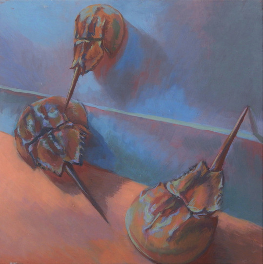 still life with horseshoe crabs