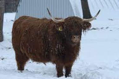 Mandico Cattle Company