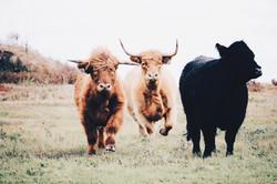 Highlands Running