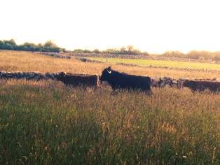 Afternoon Grazing