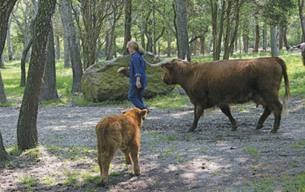 Featured Edible Cape Cod- 'Here's the Beef: Seawind Meadows in Dennis Village'