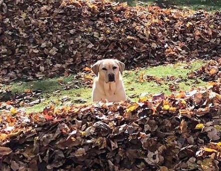 Fun, Exciting, Fall Days!