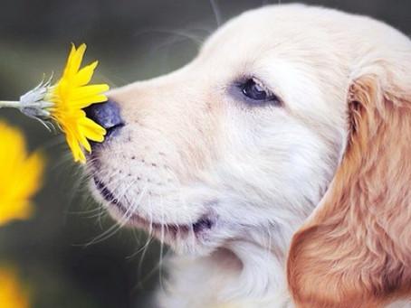 Pawsitive Tips for Seasonal Allergies!