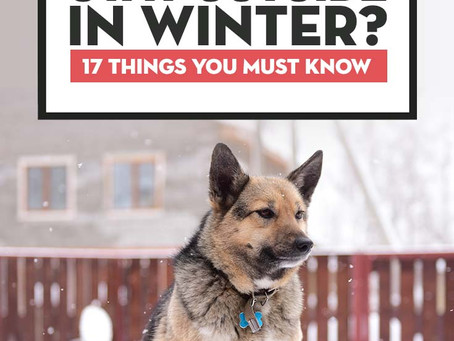 17 Things to Remember When Keeping Dogs Outside in Winter