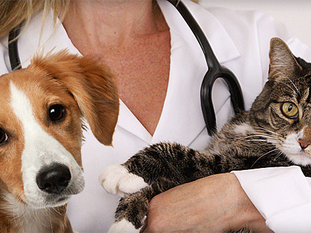 List of After-Hours Pet Emergency Clinics along the Wasatch Front