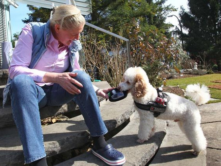 How Dogs Can Sniff Out Diabetes and Cancer