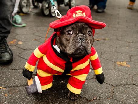 Pet Fire Safety Awareness Week!
