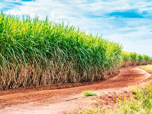 Machining sugar cane cutting blades