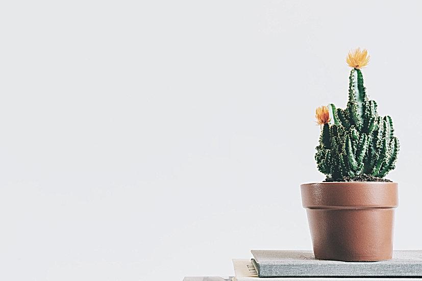 Kaktus-Anlage