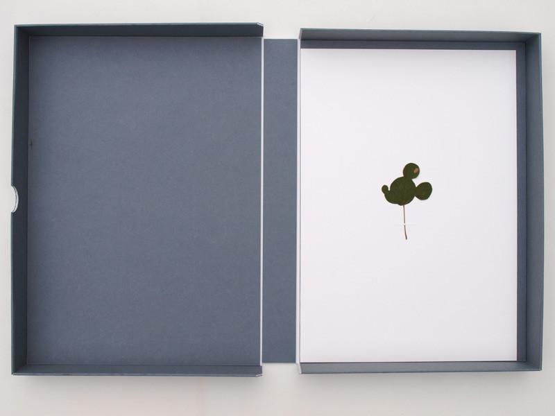 Herbarium_drawn-from-Disney_2014