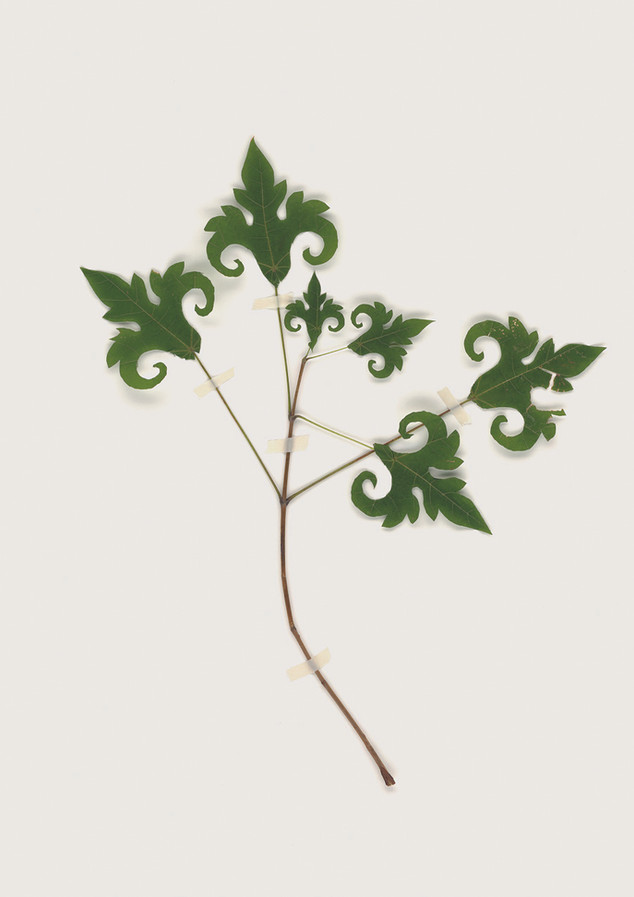 Herbarium no4 Drawn from Dezignuscom-201