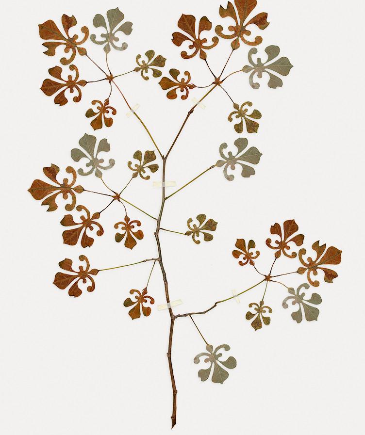 Florilegium No.5, Drawn from Dezignus.com