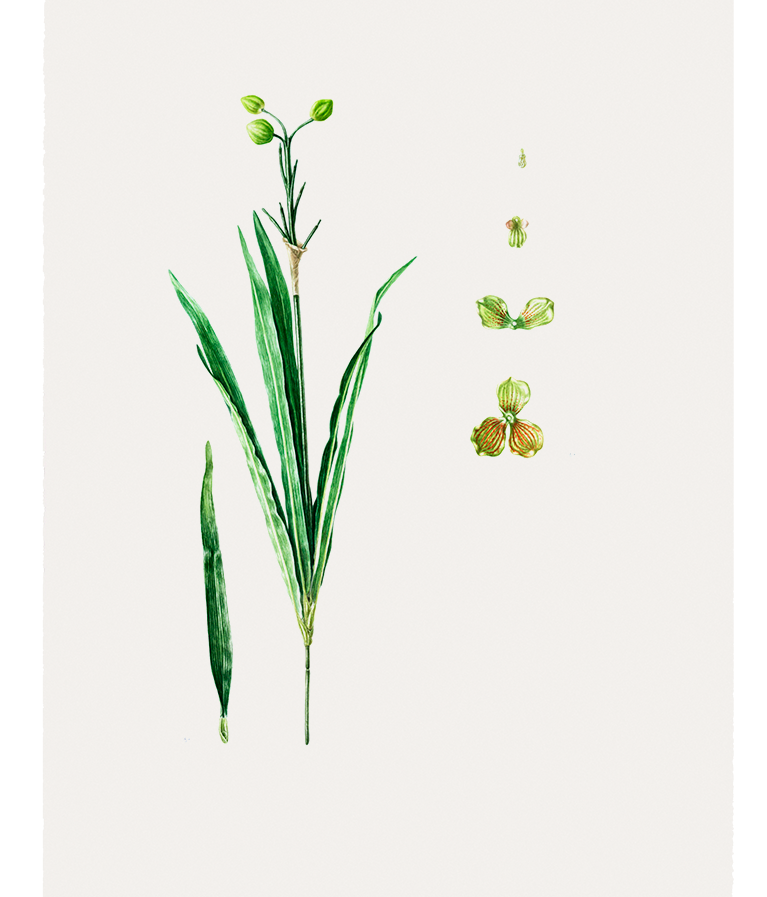Avanda-Orchid-made-in-China-Wien-2002b.t