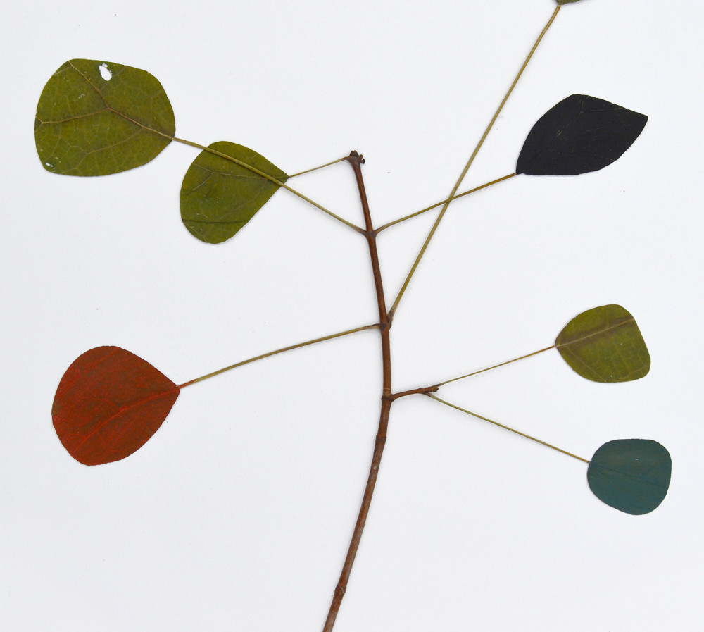 regula_dettwiler-Herbarium_No2_drawn fro