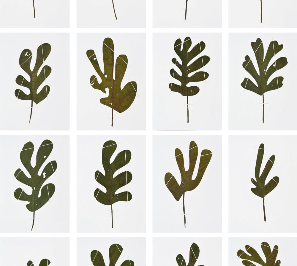Herbarium_drawn-from-Matisse_2014
