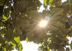 sunlight through leaves hypnosis