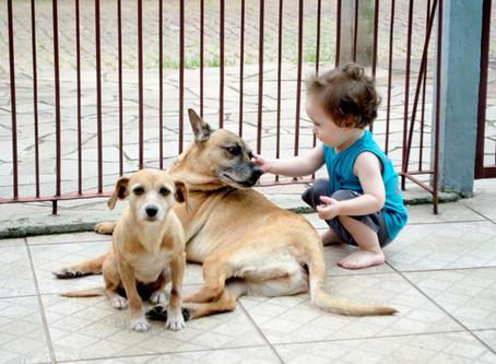 Crianças e animais de estimação, essa mistura dá certo?