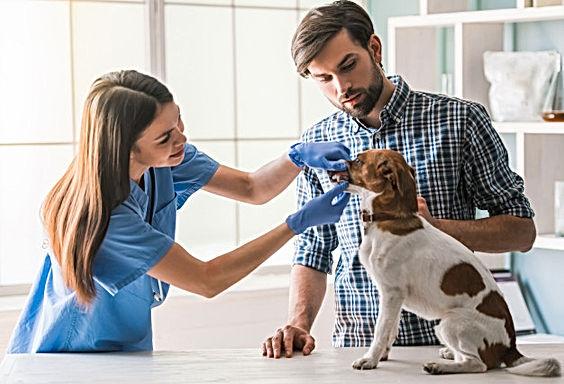 lindo-perro-siendo-examinado-veterinaria