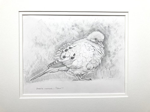 Mourning dove - graphite pencil drawing, dove, wall art, original art, original