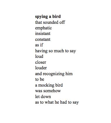 Con _ Spying a Bird