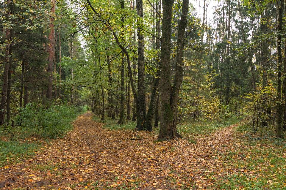 Ивантеевский лес.jpg
