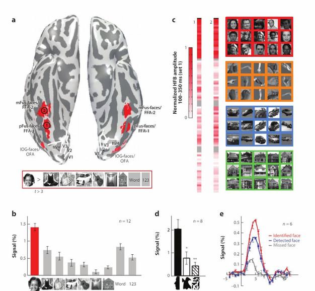 uno studio di risonanza magnetica funzionale che indica le zone del riconoscimento facciale