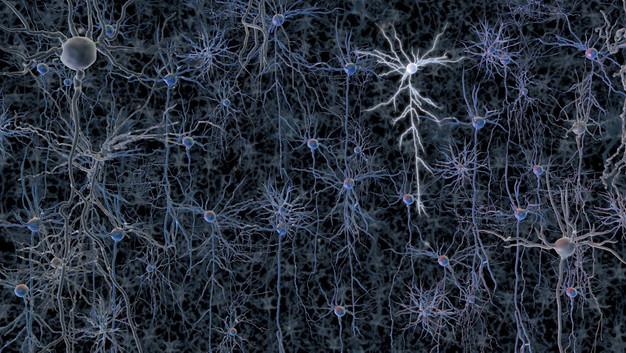 l'infinita complessità di un cervello