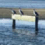 Coorong Sign.jpg
