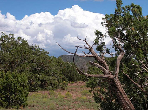 1.99 Acre Parcel on the Colorado Plateau