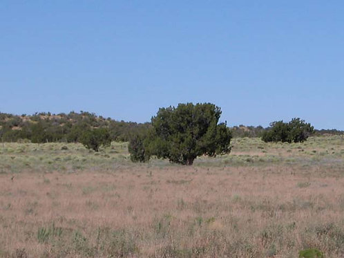 1.07 Acre Arizona Parcel on the Colorado Plateau