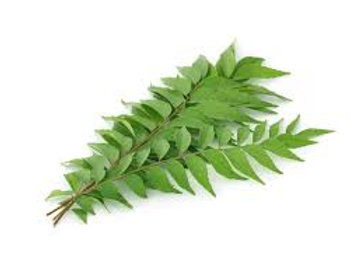 CURRY LEAVES - 1 Bunch