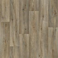 Silk Oak 973M.jpg