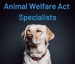 RSPCA Solicitor, RSPCA Solicitors, Animal Welfare Act