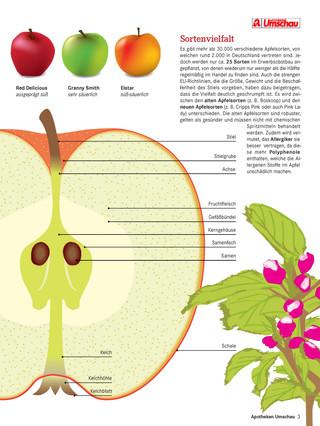 Wissensseite Apfel 2